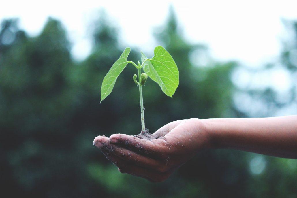 Grow plant company